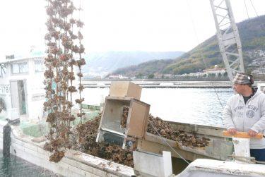 牡蠣の水揚げ疑似体験とシェフのオススメ牡蠣調理教室